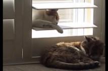 ブラインドからいたずらする猫