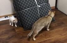 鬼ごっこする先輩猫と子猫