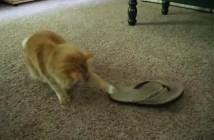 サンダルを恐がる猫
