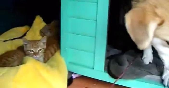 犬小屋で暮らす猫に家族ができた