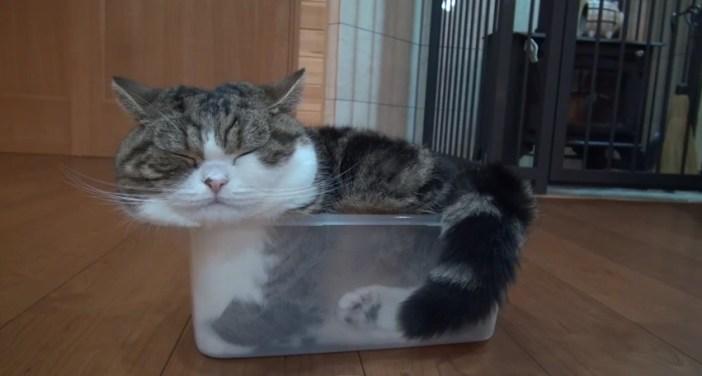 プラスチックケースと猫