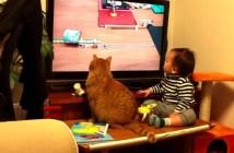 テレビを見る猫と赤ちゃん