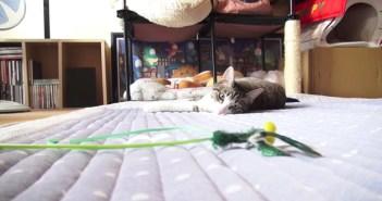 寝転がりながら飛びつく猫