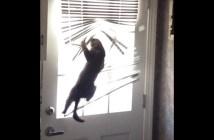 ブラインドに絡まる猫