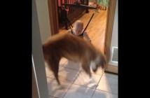 ジャンプのお手本を見せる犬