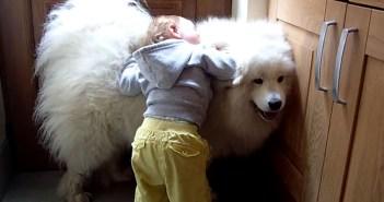 モフモフの犬が大好きな女の子