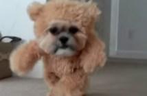 クマの着ぐるみを着る犬