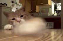 おかしをゲットする猫