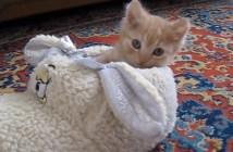 スリッパで遊ぶ子猫