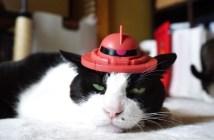 シャア専用猫