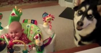 赤ちゃんを泣き止ませる犬