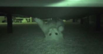 ベッド下の猫