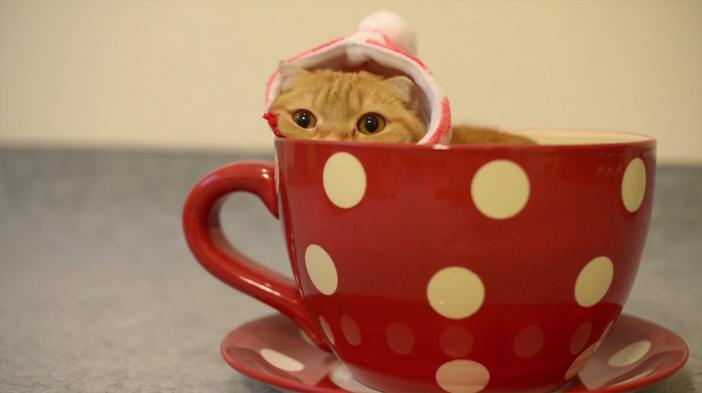 ティーカップから顔を出す猫