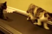 ルームランナーで走る猫