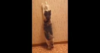壁紙が気になる子猫