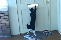 猫と郵便屋さん