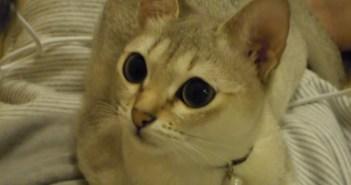 せきをするご主人さまを心配そうに見つめる猫