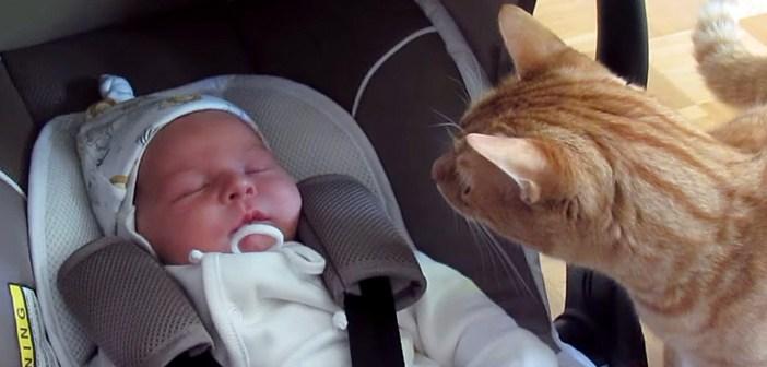 赤ちゃんを覗く猫