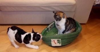 猫からベッドを取り返そうと頑張る犬