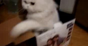 箱の中から高速猫パンチを繰り出す猫