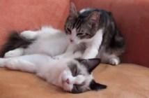 マッサージする猫