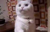 ビックリ顔の猫