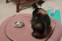 クッションから次々と出てくる子猫