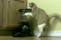 自動給餌器に突撃する猫