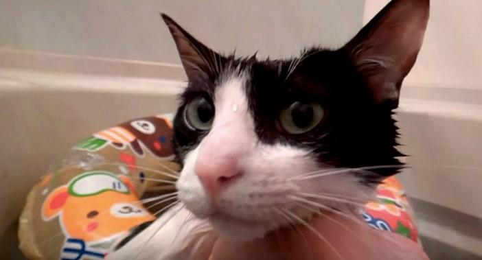 浮き袋で浮く猫