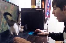 ゲームの邪魔をする子猫