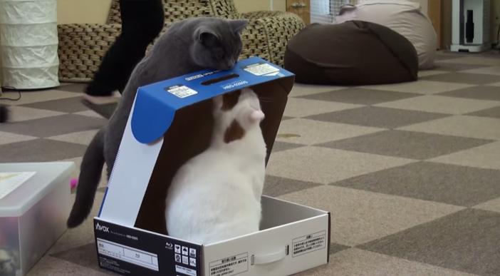 箱に閉じ込める猫