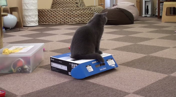 箱の上に座る猫