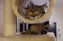 かわいい寝顔の子猫