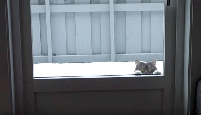 ドアの外から覗いてくる猫