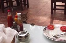 トマト泥棒の猫