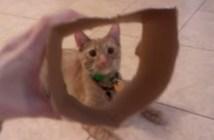穴の空いた箱が好きな猫