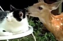 猫をペロペロする鹿