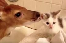 子鹿と子猫