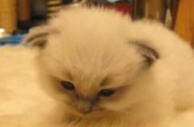 眠りに落ちていく子猫