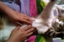 手をピーンと伸ばす猫