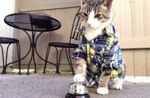 ベルをチ〜ンと鳴らす猫