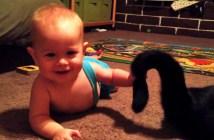シッポで赤ちゃんをあやす猫