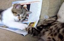 手乗せゲームをする子猫