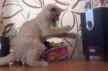 スピーカーの振動を捕まえようとする猫