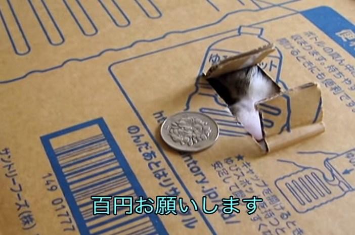 猫貯金箱100円