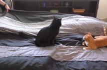 猫といっしょにベッドメイキング