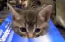 頭を出す子猫
