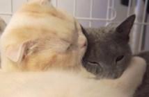 大好きな猫の抱きつく猫