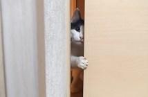 入りたいけど入れない猫