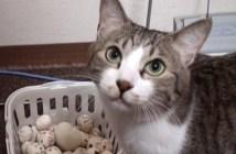 ごちそうさまを言いにくる猫